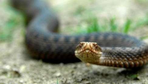 На Прикарпатті юнак потрапив до лікарні через укус змії